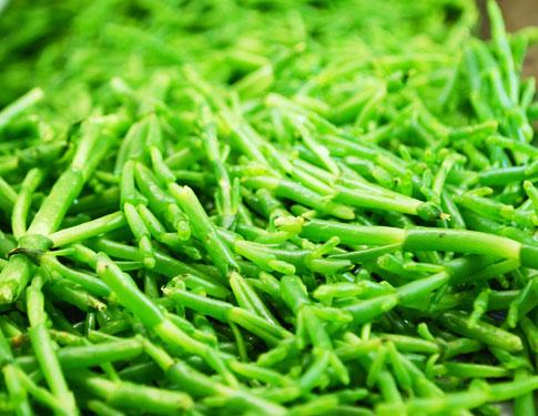 Asparagi di Mare Salicornia