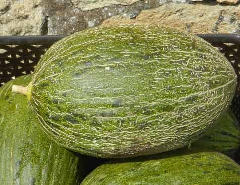 Melone Verde Sardo