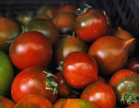 Pomodori Camone Pula